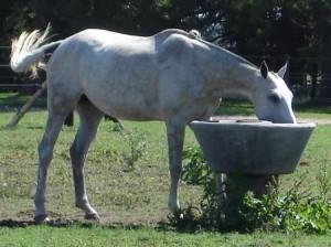 Bebedero para caballos. http://www.viarural.com.ar/viarural.com.ar/insumosagropecuarios/ganaderos/articulosrurales/prear/bebederos-para-caballos-02.htm